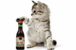 Au Japon, c'est la mode du… vin pour chat!
